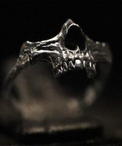 Human Jaw 1